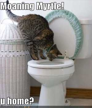 Moaning Myrtle - this is the girl's toilets, kitten. Myrtle would never hang around here, it's just not cool.