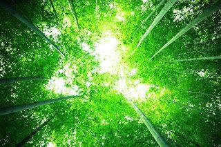 Bolygónk, a Föld: Esőerdők (teljes film)