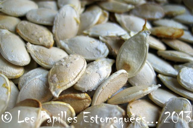 Graines courges sel 04