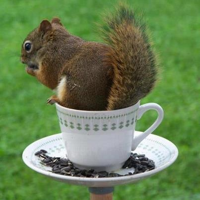 Everyone Loves Afternoon Tea