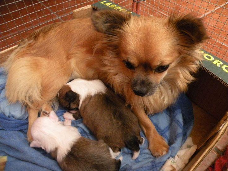 Mia 2 týždňové šteniatka