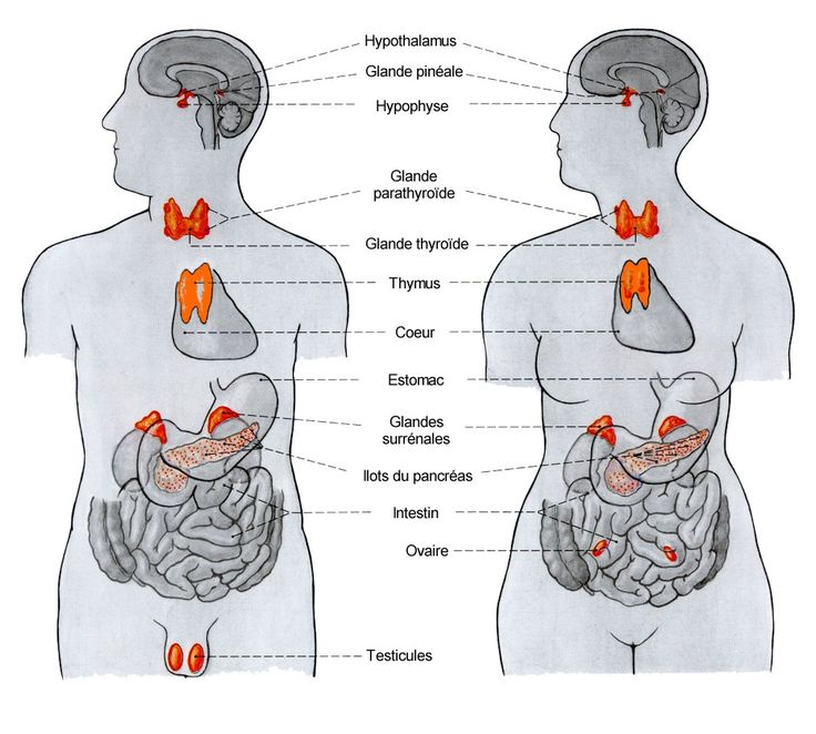 35 best ANATOMIE images on Pinterest | Anatomy art, Human body ...