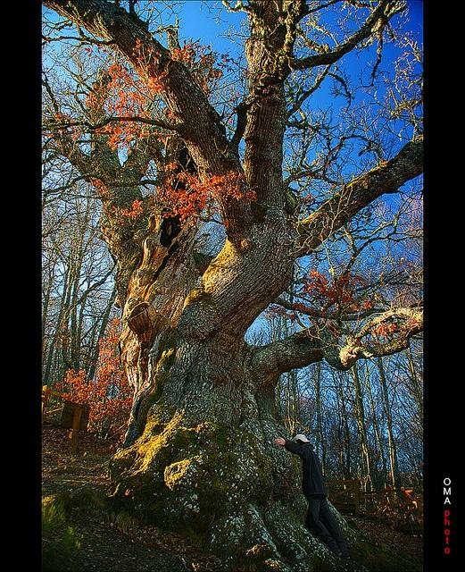 Chi exchange with magical millenarian oak / Intercambio de Qi con el mágico roble milenario., via Flickr.