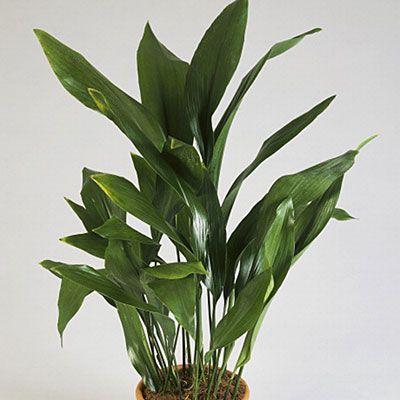 best 25+ common house plants ideas on pinterest | plants indoor