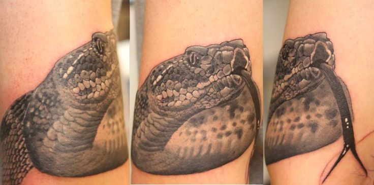 #Snake #Realistic #BlackandGrey #Tattoo #Düsseldorf #Tattoostudio #Tattoodüsseldorf Living Illustrations Tattoo & Piercing Atelier Düsseldorf Stadtmitte Oststraße 114 // 40210 Tel.: 021191187609 Facebook: livingillustrationstattoo