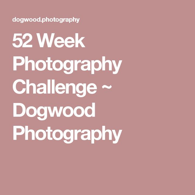 52 Week Photography Challenge ~ Dogwood Photography