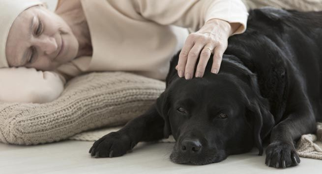 Animal Assisted Therapy - How animals help humans combat health problems