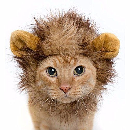 #Lion #Mane #Fancy #Dress #Costume for #Cats. #Fun #Pet #Apparel for #Parties and #Halloween LION's #MANE FELINE #FANCY DRESS: Cat owners know that secretly their #cats think they are lions. They stretch out in the sun, regard their territory with smug satisfaction and go for a hunt when they can be bothered. All that has been missing is the lion's #mane but not any longer! Here it is, in its full glory. KITTY DELIGHT: From everyday domestic cat, to ferocious king of the jung
