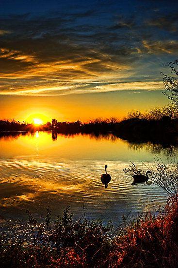 Canadian geese sunset ~ Arizona, USA