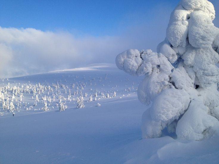 Finnish Lapland. Pallas-Ylläs Nationalpark. Kesänkitunturi.