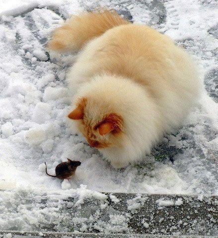 Фото Без названия. Альбом Кошки - 185 фото. Фотографии !Писатель Александр Романов.