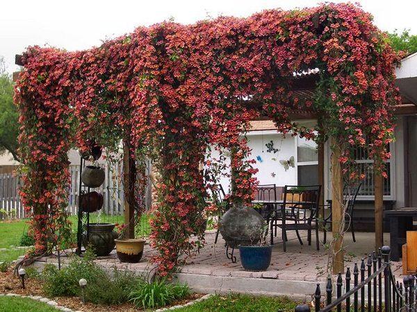 Las 25 mejores ideas sobre enredaderas con flores en for Porches de ocasion