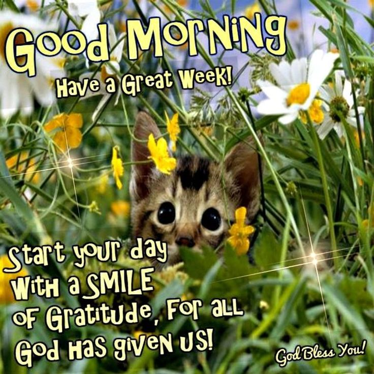 Good Morning Have A Great Week Start Your Day With A Smile monday good morning monday quotes good morning quotes happy monday monday quote happy monday quotes good morning monday