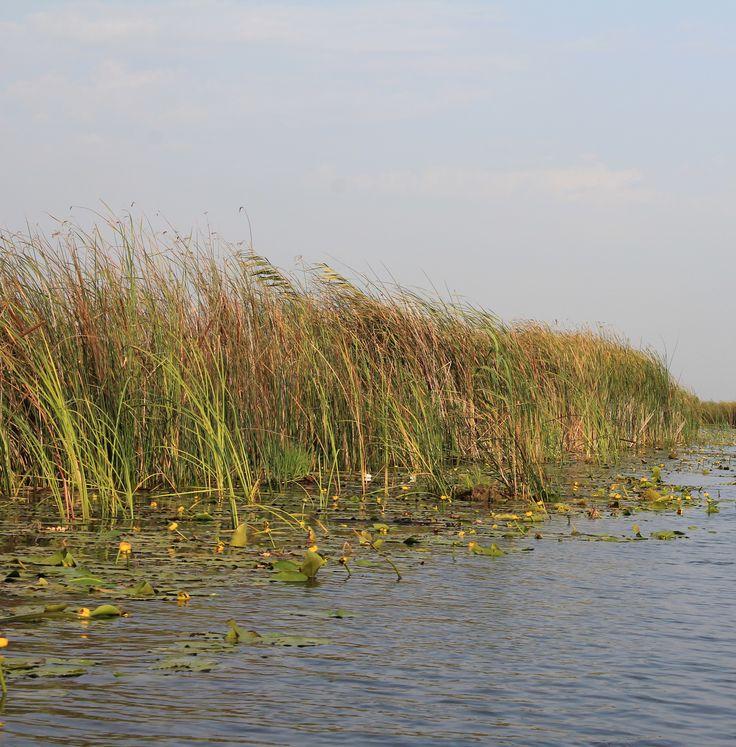 Cum s-a format Delta Dunării? Întâlnirea fluviului cu marea și cucerirea ei de-a lungul timpului