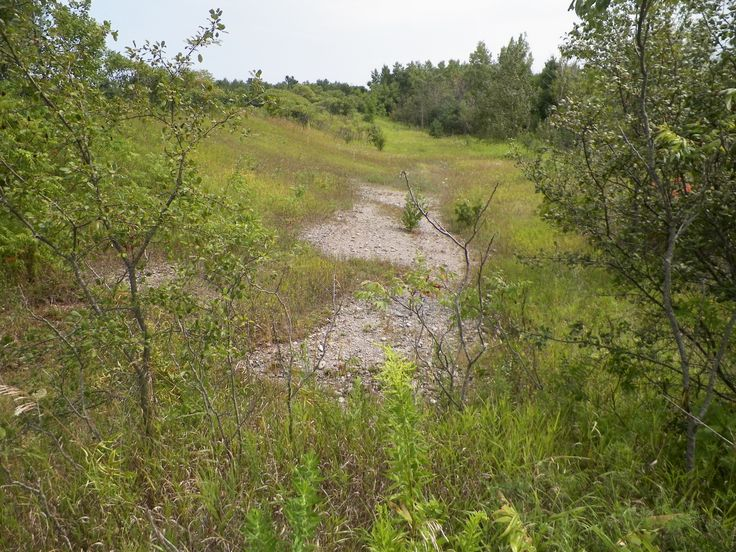 Former sand beach of Lake Iroquois - now high and dry at Heber Down Conservation Area. Beach volleyball anyone?