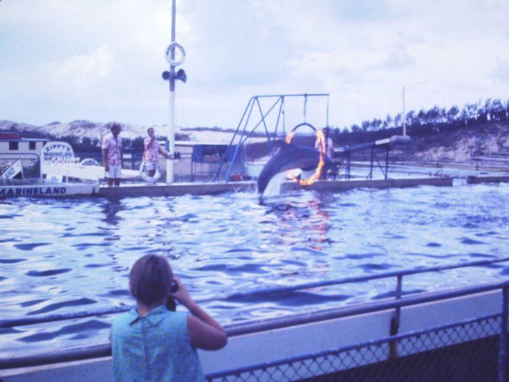 Wallpaper Burleigh Heads Beach Gold Coast Queensland: 478 Best The Goldie Images On Pinterest