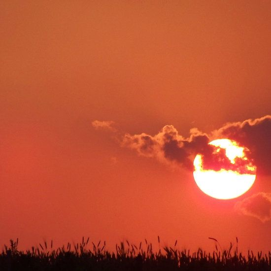 Oklahoma dawn in the wheat field