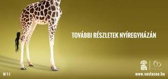 sosto zoo
