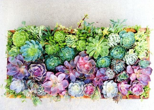 Succulents Are Everywhere Lately, But Never Before Has A Rainbow Succulent  Centerpiece Been Featured.