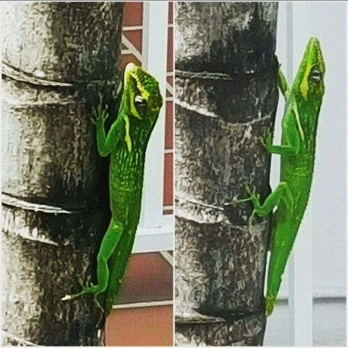 Miami Wildlife