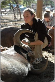 Wildlife Veterinary Courses in South Africa