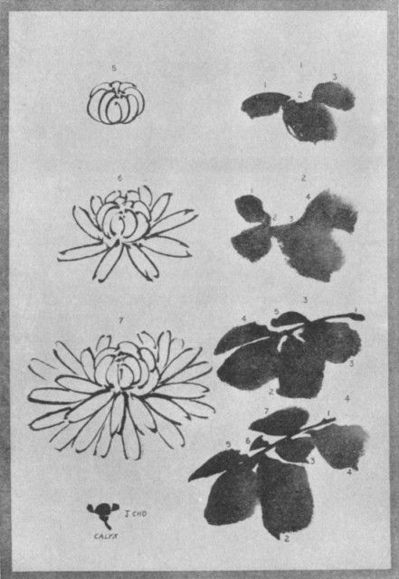 The Chrysanthemum Flower and Leaves. Plate LI.