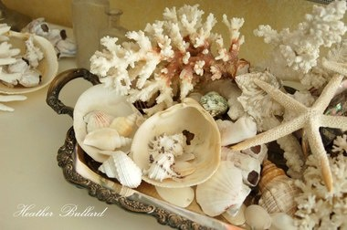 shell collections