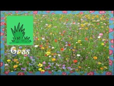 Deutsch lernen: draußen im Garten - ein einfaches Frühlingslied für Kinder - YouTube
