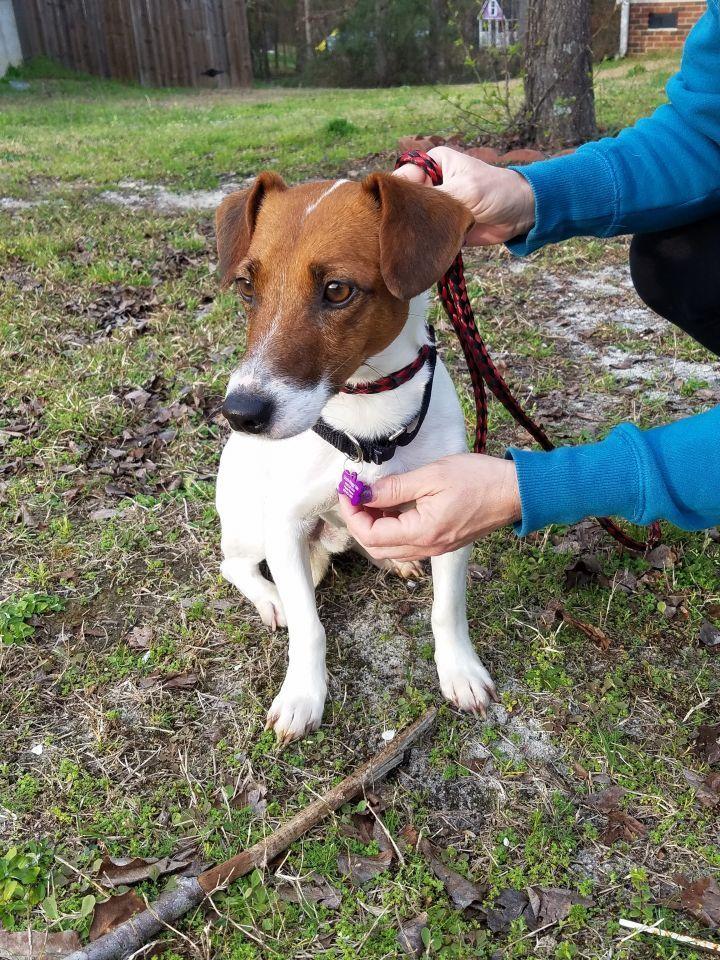 Adopt Jax On Petfinder Help Homeless Pets Homeless Pets Pet Adoption