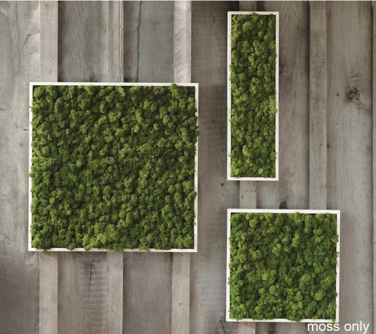Fern And Moss Wall Art