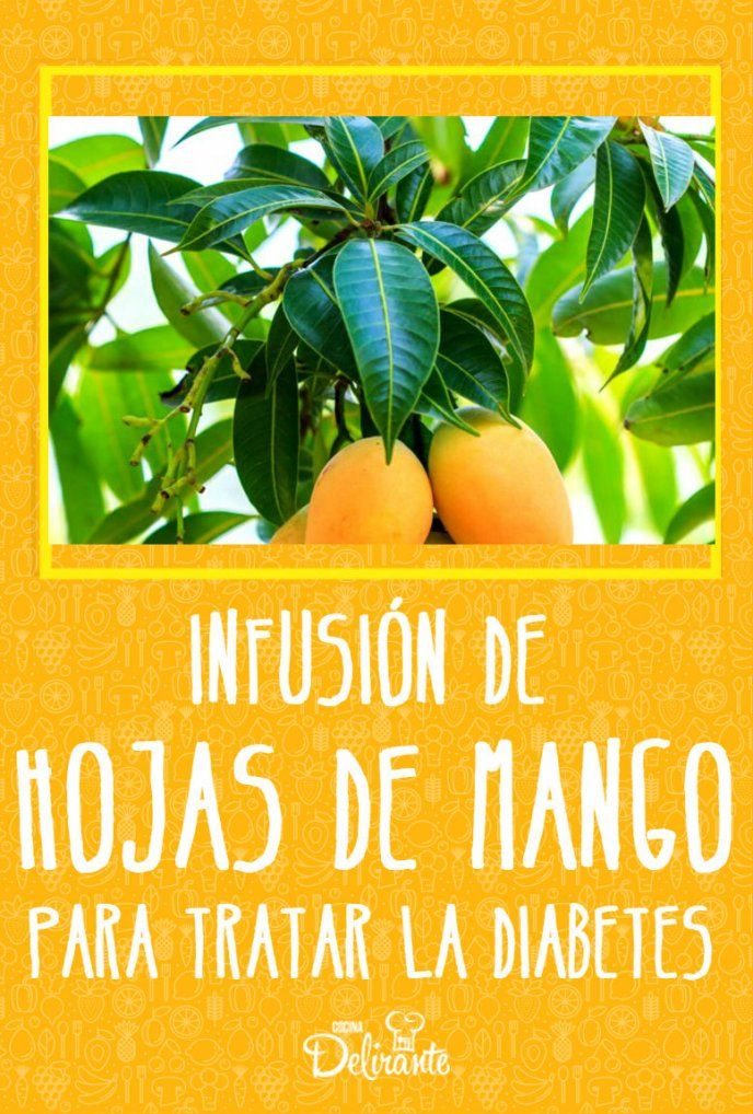 filotaxia de hojas de mango y diabetes