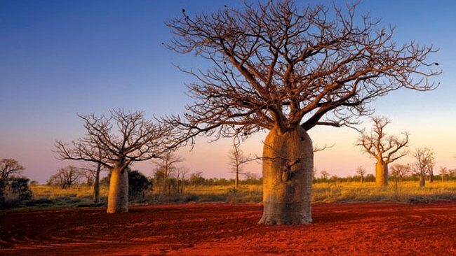 Kimberley Boabs -- Lonely Planet listing Kimberley as a must-see long needed, says Tourism Council of WA