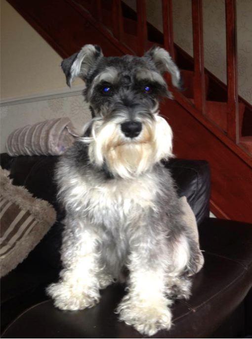 Deb Jones' dog Teddy #PreciousPet of #April #PoM