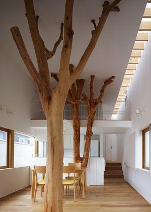 As árvores foram plantadas no terreno da família há 35 anos