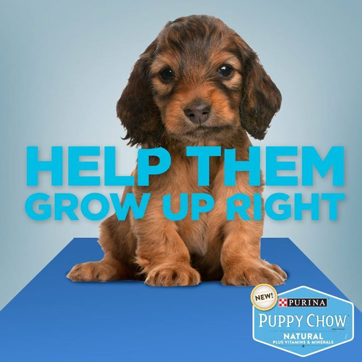 Photo from @PurinaPuppyChow on Facebook by Purina Puppy Chow