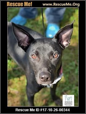 ― Indiana Greyhound Rescue ― ADOPTIONS ― RescueMe.Org