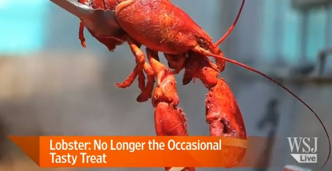 Lobster Prices Dropping |