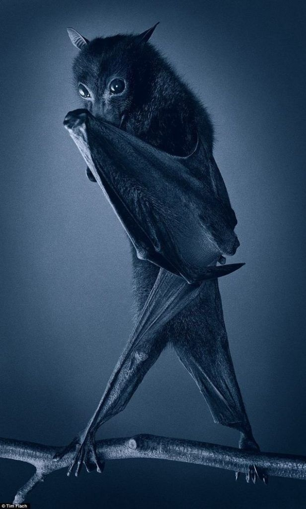 13 Fascinating Bat Photos Nat Geo Bat Photos Wild Animals