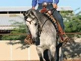 Have you see the latest article by Horse and Rider! It has some great tips...check it out.