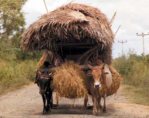 Animals Pulling Wagon : Best going places images on pinterest cart karting