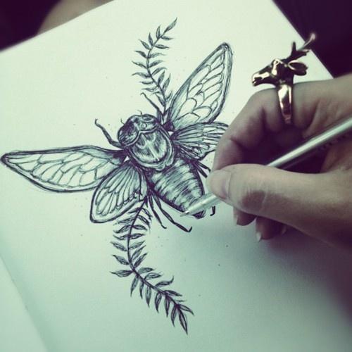 cicada diagram inspiration