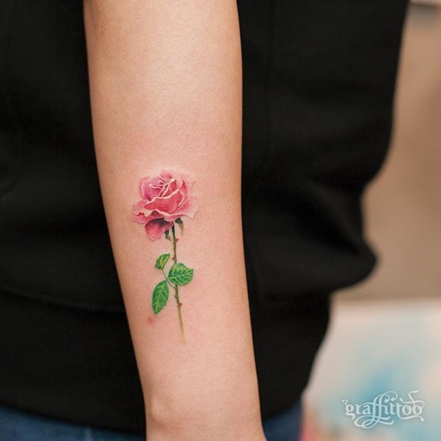 Delicate pink rose with stem and thorns.