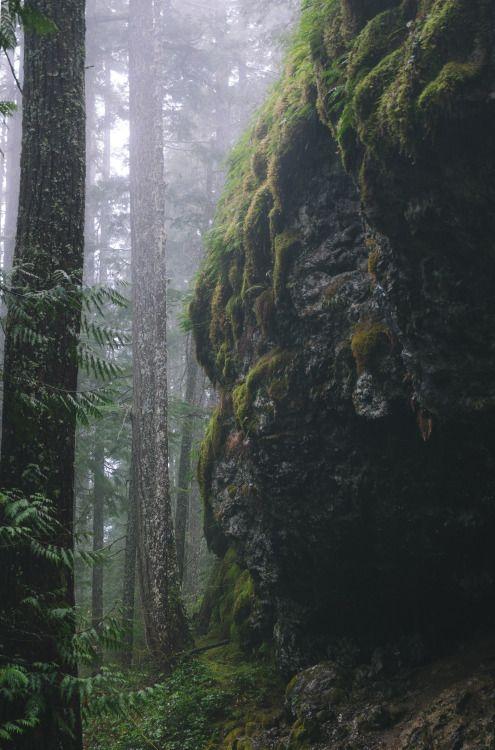 millivedder:Ancient Forest