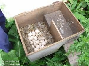 duck nest box - - Yahoo Image Search Results