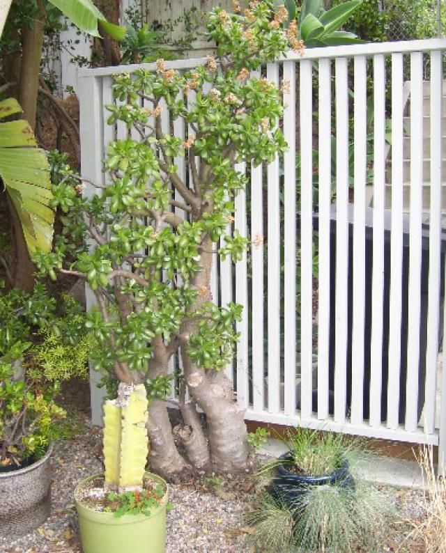 Instant Ideas for Outdoor Privacy Screens: Things to Consider When Choosing an Outdoor Privacy Screen