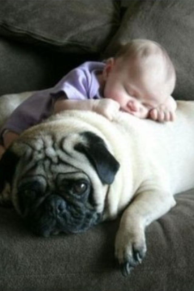 Best Pugs Images On Pinterest Beautiful Dogs And Hair - 30 adorable pictures babies puppies will melt heart