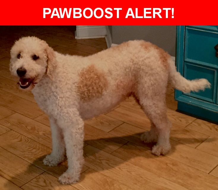 Please spread the word! Webber was last seen in Pasadena, TX 77504.  Description: Labbradoodle / White with brown spots / last seen with Kalua a brown labradoodle  Nearest Address: 1707 Buckingham, Pasadena, Tx 77505