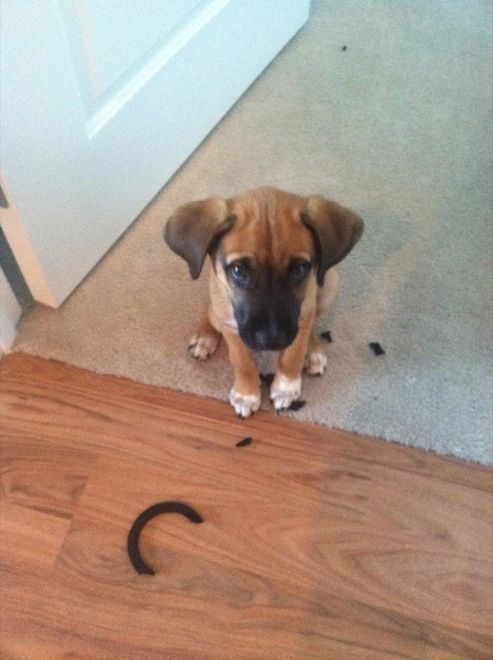 Best Guilty Dog Ideas On Pinterest Shaming Definition I - 26 funny photos of guilty dogs