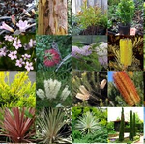 Bulk 99 cents Garden Native plants clearance stock x 30 Mixed Australian Native Plants RANDOM Garden Trees Shrubs $29.70