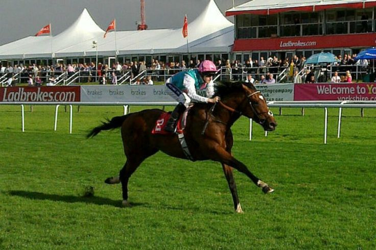 Frankel – The Greatest Racehorse Of All Time